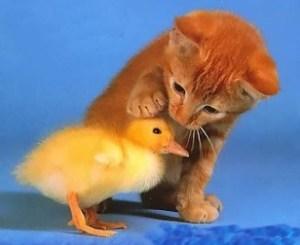 Empatia, to nie współczucie. Empatia, to współodczuwanie...